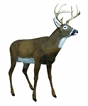 Flambeau Boss Buck